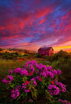~~Live in the Moment | Sunrise flower meadow barn landscape in Wisconsin | by Phil Koch~~