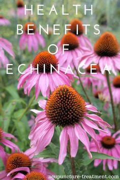 Health Benefits of Echineacea Plant