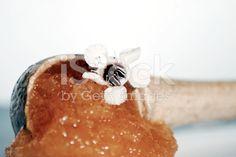 Manuka Honey and Flower royalty-free stock photo Kiwiana, Manuka Honey, Base Foods, Alternative Medicine, Flower Photos, Natural Health, Royalty Free Stock Photos, Breakfast, Easy