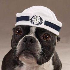 a navy hat