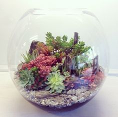 The colourful succulent world. Terrarium by bioattic