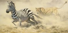 RAZORS EDGE - New Release Artwork New Release Limited Edition Reproductions of African Wildlife Artist Brian Jarvi - New Limited EditionsBrian Jarvi