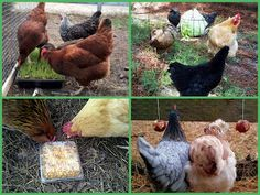 Fresh Eggs Daily: Healthy (and Creative) Treats