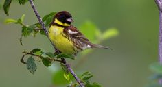 Beautiful Birds, Natural Beauty, World, Nature, Animals, Touch, The World, Animales, Naturaleza