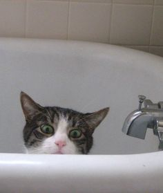 21 Cats Acting Sneaky   PawNation