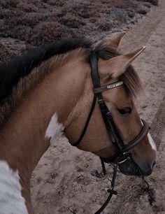 Cute Horses, Beautiful Horses, Cute Creatures, Beautiful Creatures, Cavalo Wallpaper, Cute Kawaii Animals, Horse Pictures, Horse Girl, Horseback Riding