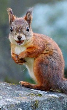 Gallery of Happy Squirrels (*Feelin' Squirrely group board*)
