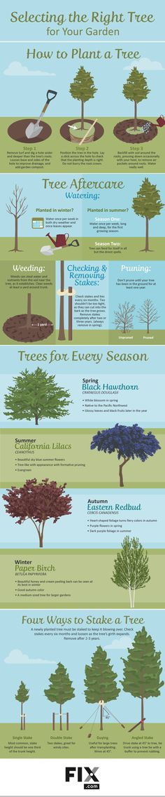 Let these shorter trees shelter your backyard with elegance and some amazing natural benefits. Trees secure the soil, and help create a more stable gardening environment.