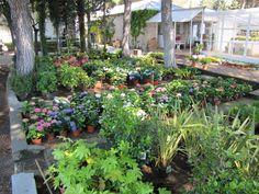 Instalaciones del #vivero con todo tipo de #plantas y #flores, tanto de interior como de exterior. #ÁrbolesFrutales, #ÁrbolesOrnamentales, etc. #jardín #jardinería www.viverosirun.es
