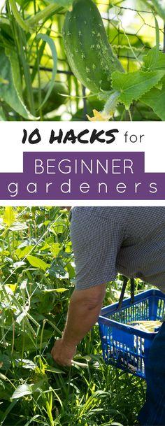 77 Best Garden Tips Images In 2020 Garden Vegetable Garden