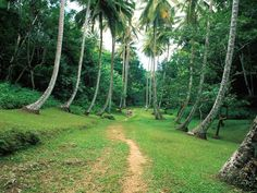 Welchman Hall Gully - Top 10 things to do in Barbados Caribbean Vacations, Caribbean Sea, Visit Barbados, Little England, Windward Islands, Next Holiday, Hotels And Resorts, Vacation Spots, Outdoor Activities