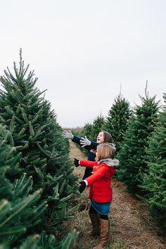 fraser firs at christmas tree farm near asheville north carolina - Christmas Tree Farm Asheville Nc