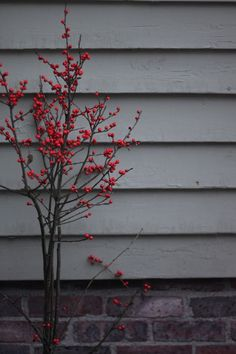 Winter Ilex Berries from Justine Hand's Blog, Design Skool | Remodelista