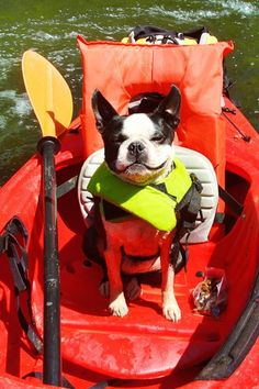 kayaking fun.... lol LOVE THIS!  My Boston would be so happy if I took him with me!