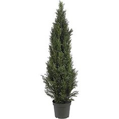 @Overstock - Add a natural look to your home decor with a silk plant  Decorative accessory measures a healthy 5 feet tall  Deck the halls with a lovely mini cedar pine treehttp://www.overstock.com/Home-Garden/Mini-5-foot-Indoor-Outdoor-Cedar-Pine-Tree/4468565/product.html?CID=214117 $113.99