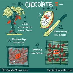 bean2bonbon post - How Chocolate is Born! Part 1 in a series of chocolate infographics we created with Megan Giller of Chocolate Noise!