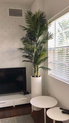 Corry cylinder fiberglass planter | Jay Scotts Manufacturing