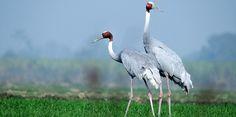 Top Bird Sanctuaries and National Parks around Bangalore - Tour My India