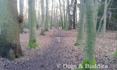 Hundeblog dogsundbuddies.com - Blog - Hundeblogger - Dogblog - Dogblogger - Niedersachsen - Oldenburg - Oldenburger Hunde - Eversten Holz