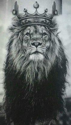 Lion of Judah Lion Images, Lion Pictures, Animals Beautiful, Cute Animals, Safari Animals, Wild Animals, Lion Head Tattoos, Lion Tattoo With Crown, Tattoos Skull