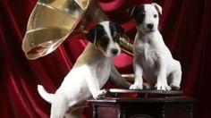 Gramophone Pups