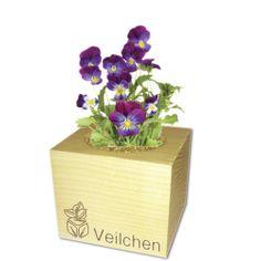 Verschönere dein Heim: EcoCube - Pflanzen in Holzwürfeln - Geschenke von Geschenkidee