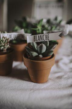 Seating plan, cactus, wedding