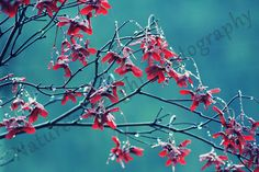 """Pictures of Nature - 2 - """"red helicopters"""""""