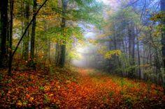 Misty autumn - Forests Wallpaper ID 1575065 - Desktop Nexus Nature