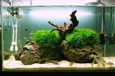 . Aquascaping, Aquarium Ideas, Tanked Aquariums, Planted Aquarium, Plantar, Scp, Layout Inspiration, Betta Fish, Goldfish