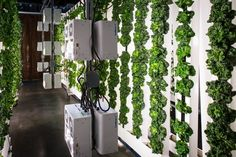 ZipFarms are easy to use, modular, vertical growing systems for the individual urban farmer.