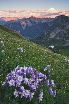 Flowers - Moutains