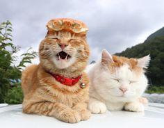 かに | のせ猫オフィシャルブログ Powered by Ameba