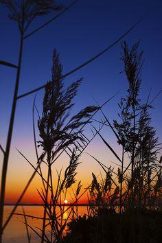Sunset Silhouette, Riffa, Bahrain