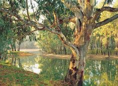 Stock Photo : Old River Red Gum (Eucalyptus camaldulensis) by a Murray River billabong at Corowa, New South Wales, Australia Outback Australia, South Australia, Australia Country, Western Australia, Australia Visa, Work And Travel Australia, Australia Landscape, Parks, Murray River