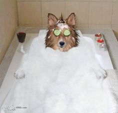 Who says dogs don't like baths!