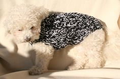 Dog Sweater. Handmade Dog Clothes. Pet Clothing. Hand by BubaDog