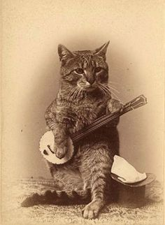 I bet this cat plays a mean bluegrass tune.