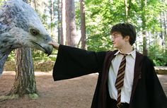 Harry (Daniel Radcliffe) meets Hippogriff Buckbeak in Harry Potter and the Prisoner of Azkaban Harry Potter Tumblr, Studio Harry Potter, Harry Potter Tour, Harry Potter Movies, Harry Potter World, Ron Weasley, Ron And Hermione, Hermione Granger, Daniel Radcliffe