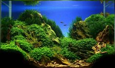 Aquascaping | Jan Simon Knisple und das Aquascaping - Wasserpflanzen ...