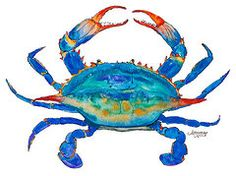 Crab Paintings - Blue Crab by Alexandra Nicole Newton