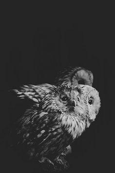 owls, Jojanne