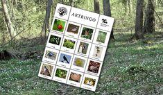 bingobricka med arter mot en bakgrund av skog med vitsippor