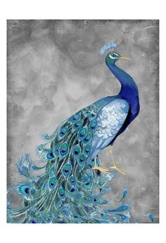 Peacock on Grey 2 Art Print at AllPosters.com