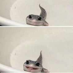 Issues With Keeping Lizards As Pets Cute Lizard, Cute Gecko, Cute Snake, Cute Little Animals, Cute Funny Animals, Funny Cute, Cute Reptiles, Les Reptiles, Amphibians