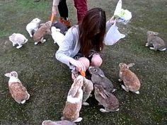 bunnies  #cute #bunny #bunnies #animals