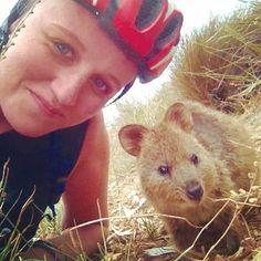 Quokka selfie #quokka #rottnest #island #rottnestisland #holiday #resort #WA #perth #selfie #cycle #cute #nature #animals #wildlife #special #rare #furry #cuddles #backpacker #travel #friendly #australia #oz #aus #happy by grrrreatscot http://ift.tt/1L5GqLp