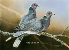Pastel Band Tailed Pigeon Painting - California Upland Game Stamp entry by Roby Baer