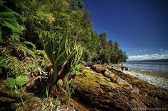 2012 LAGUNA SAN RAFAEL - KAYAK DE TRAVESÍA - 15 by OUTDOORSTV, via Flickr
