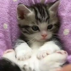 Top 25 Cute Kittens and Funny Cats - Tiere Cute Cats And Kittens, Baby Cats, I Love Cats, Cool Cats, Kittens Cutest, Ragdoll Kittens, Bengal Cats, Kittens Meowing, Cute Funny Animals